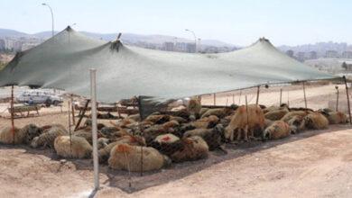 Photo of Karaköprü'de kurban satış ve kesim yerleri belirlendi