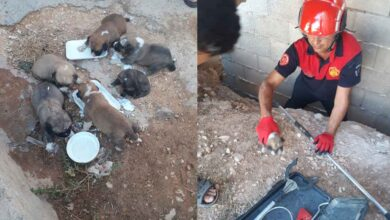 Photo of Şanlıurfa'da Köpek Kurtarma Operasyonu