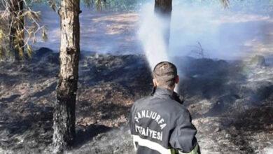 Photo of Ceylanpınar'da Ağaçlık Alanda Yangın
