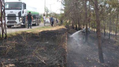 Photo of Şanlıurfa'da Ormanlık Alanda Yangın