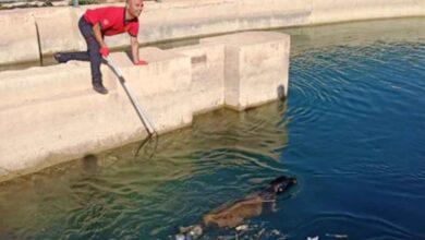 Photo of Urfa'da sulama kanalına düşen köpek kurtarıldı