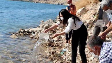 Photo of Fırat'a 75 bin adet yavru şabut bırakıldı