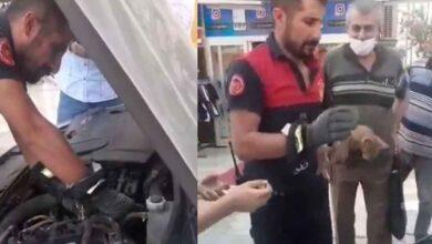 Photo of Urfa'da Kediyi kurtarmak için itfaiye seferber oldu