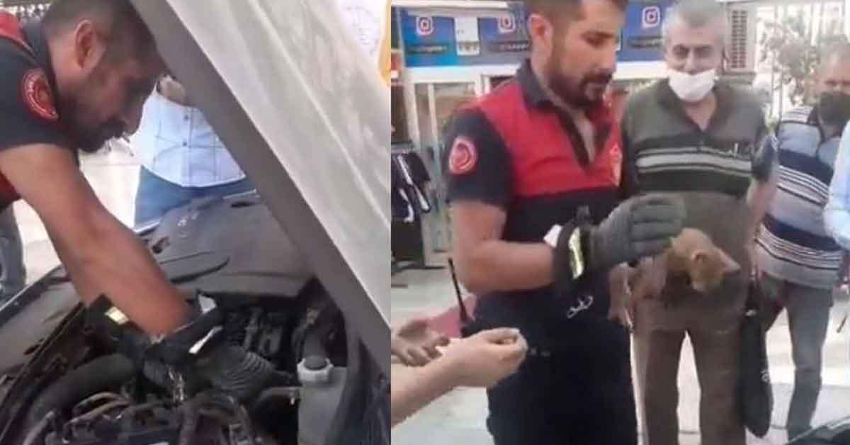 Urfa'da Kediyi kurtarmak için itfaiye seferber oldu